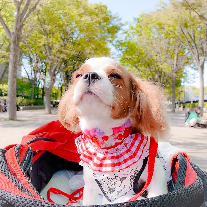 【代々木公園】わんわんカーニバル2021/お散歩デビューは青空の下で開催される年に一度のカーニバル!
